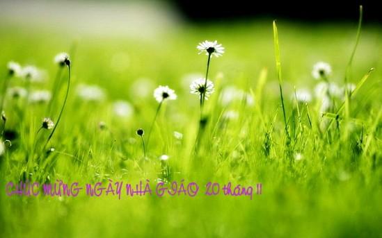 hinh-anh-hoa-daisy-dep-686-25ttm